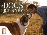 A Dog s Journey (2019) : หมา เป้าหมาย และเด็กชายของผม 2